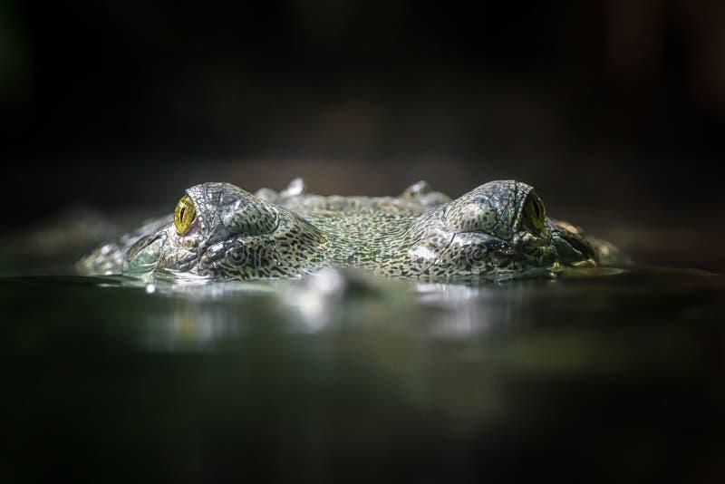 gavial印地安人 库存图片
