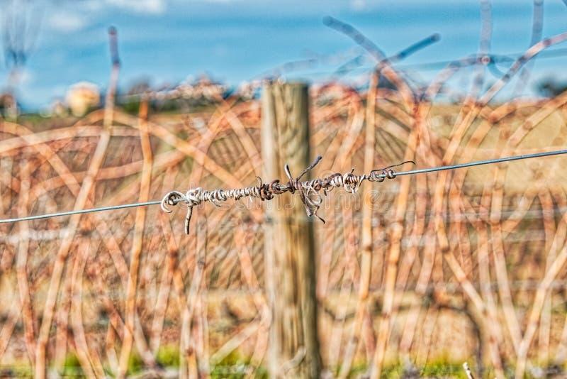 Gavinhas secadas no fio fotografia de stock