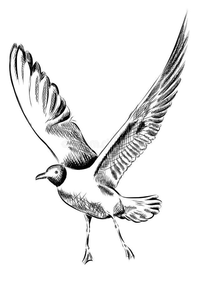 Gaviota libre illustration