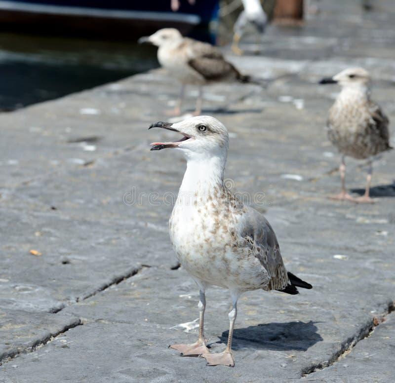 Download Gaviota imagen de archivo. Imagen de cubo, seabirds, fondo - 44851643