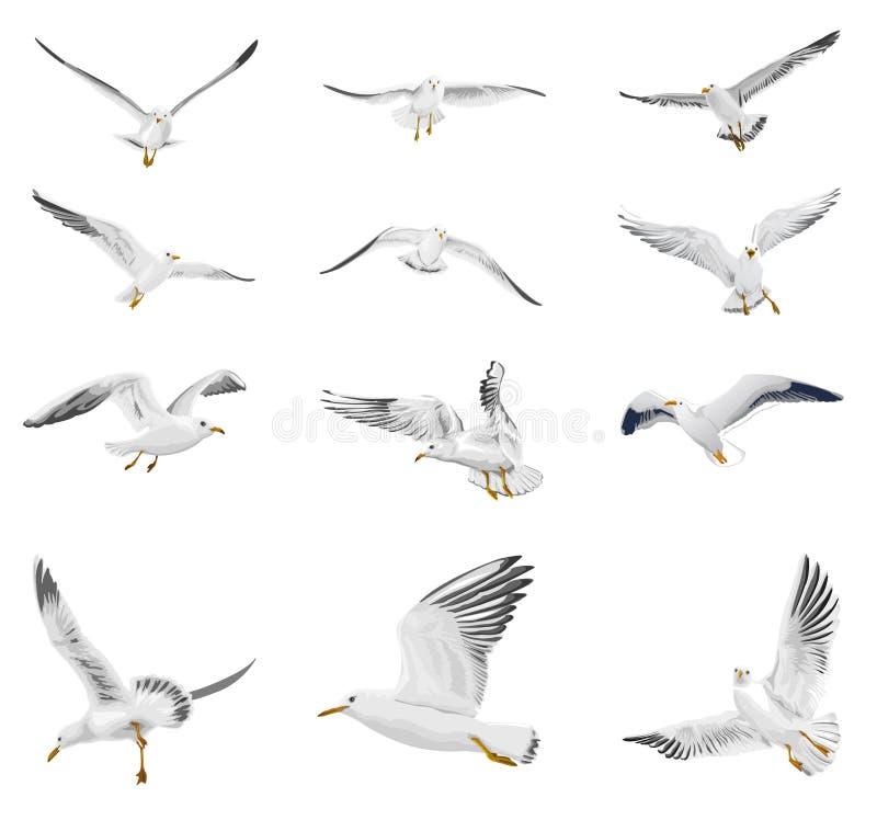 Gaviota del vuelo stock de ilustración