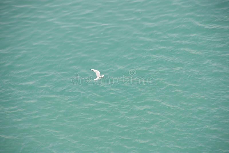 Gaviota blanca sobre el agua azul foto de archivo libre de regalías