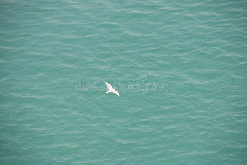Gaviota blanca sobre el agua azul imagenes de archivo