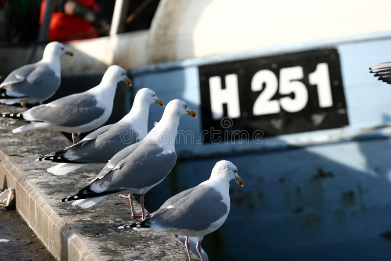Gaviota del pájaro imagen de archivo