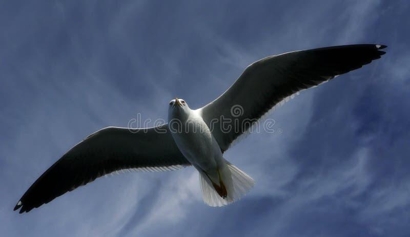 Gaviota en el cielo fotos de archivo libres de regalías