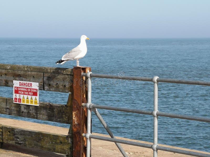 Gaviota en el mar Norfolk fotografía de archivo libre de regalías