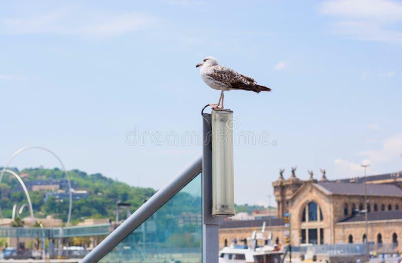 Gaviota en el puerto de Barcelona delante del aduanas antiguas fotos de archivo libres de regalías