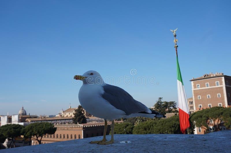 Gaviota en la ciudad de Roma fotografía de archivo libre de regalías