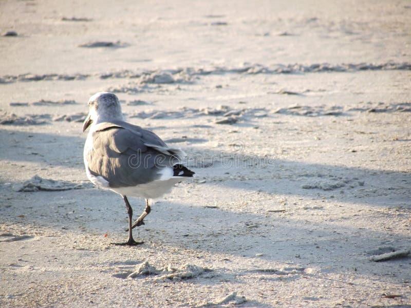 Download Gaviota en la playa foto de archivo. Imagen de fauna - 44850610