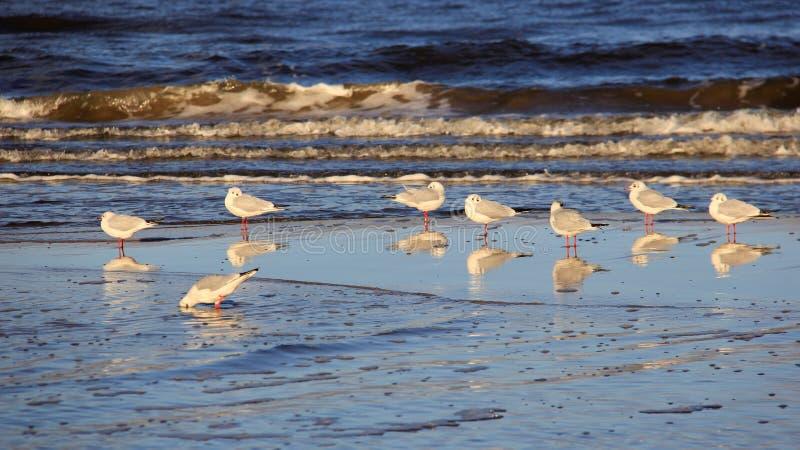 Gaviota en la playa Libertad de Hapiness y manera de vida fácil foto de archivo libre de regalías