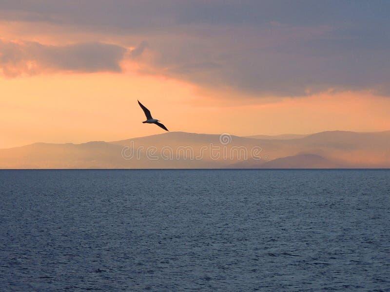 Gaviota en la puesta del sol imagenes de archivo