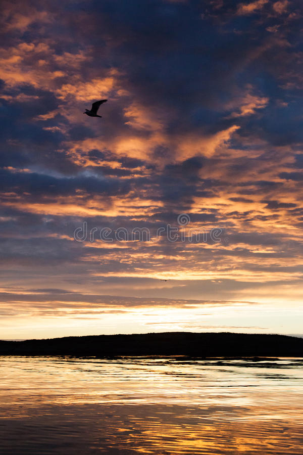 Gaviota en puesta del sol imagenes de archivo