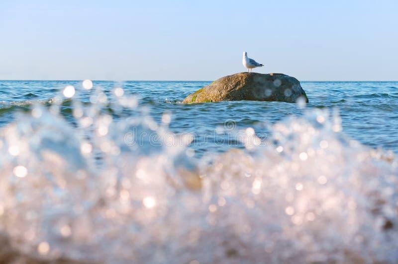 Gaviota en una piedra en el mar, gaviota solamente en las ondas que se colocan en una piedra foto de archivo
