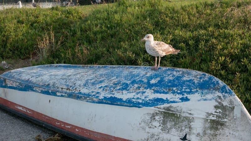 Gaviota encaramada en el barco de pesca vuelto hacia arriba fotografía de archivo