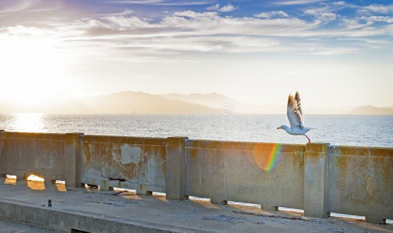 Gaviota que fija apagado de la verja en San-Fransisco Pier Duri foto de archivo libre de regalías