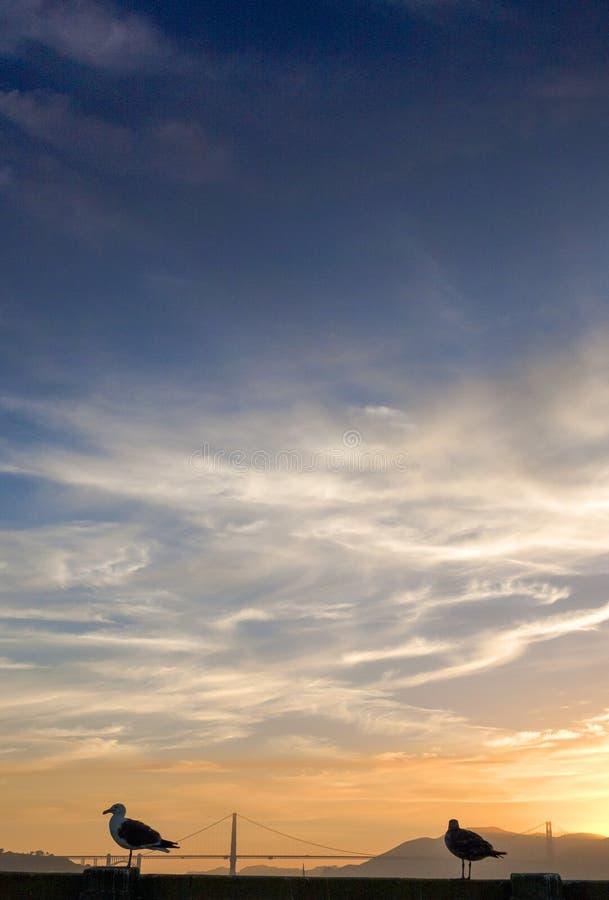 Gaviota que fija apagado de la verja en San-Fransisco Pier During Sunset imagenes de archivo