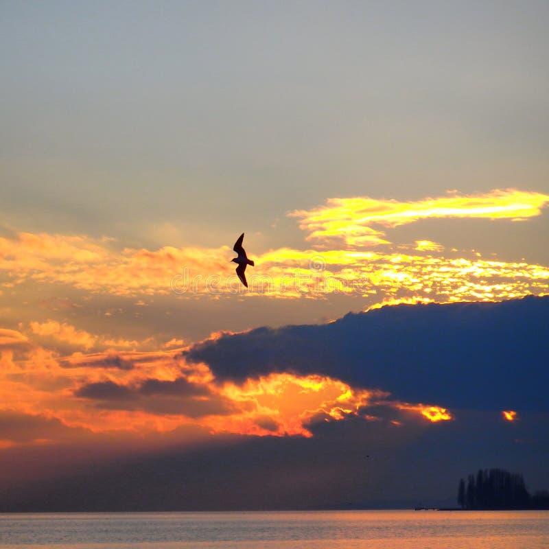 Gaviota que se desliza en la puesta del sol imágenes de archivo libres de regalías