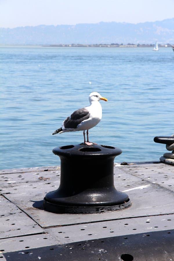 Gaviota que se sienta en una pila en el embarcadero de San Francisco, Estados Unidos imagen de archivo libre de regalías