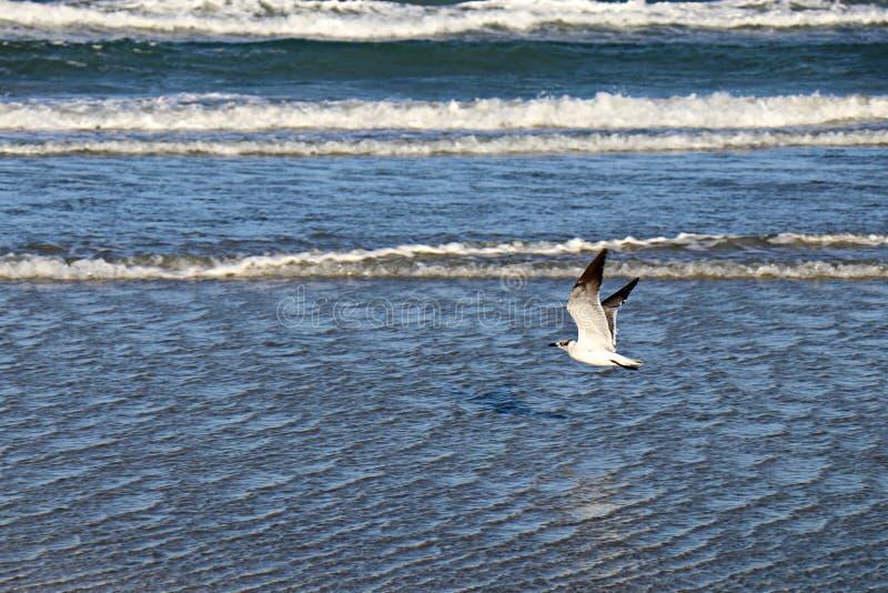 Gaviota que vuela sobre el océano azul imágenes de archivo libres de regalías