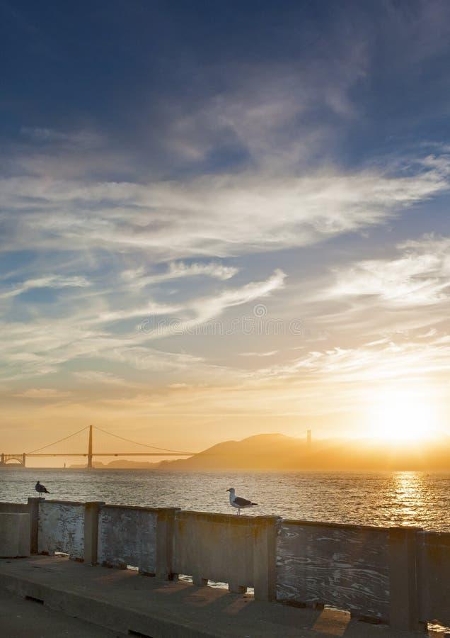 Gaviota tranquila hermosa que se sienta en la verja en San-Fransisco P imagen de archivo libre de regalías