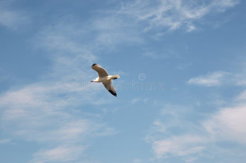 Gaviota volando en el cielo azul con nubes fotos de archivo