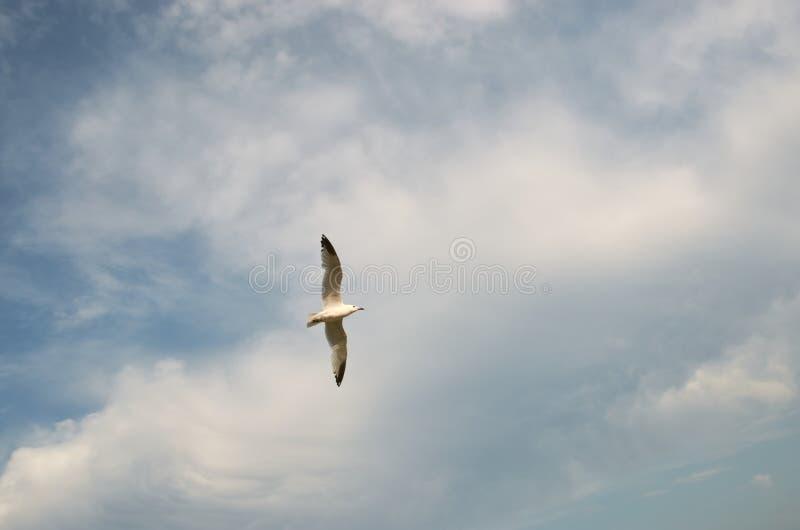 Gaviota volando en el cielo con arbustos imagen de archivo