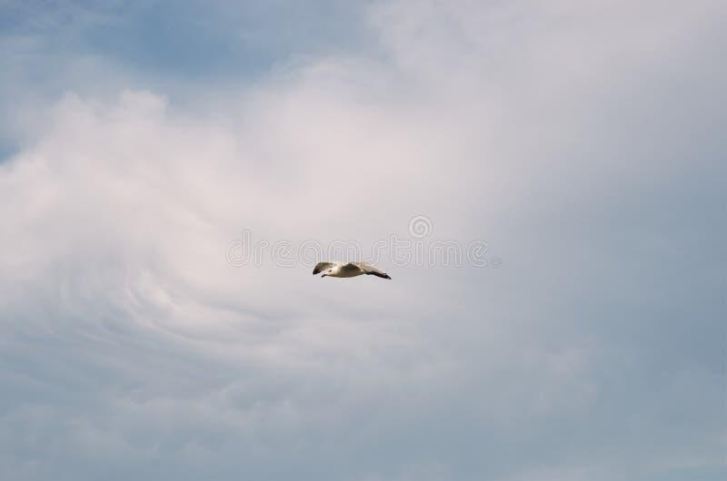 Gaviota volando en el cielo fotografía de archivo