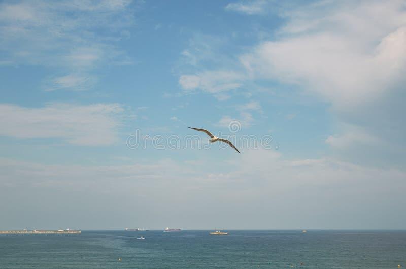 Gaviota volando en el cielo sobre el mar imagen de archivo