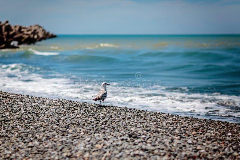 Gaviota y mar imagen de archivo