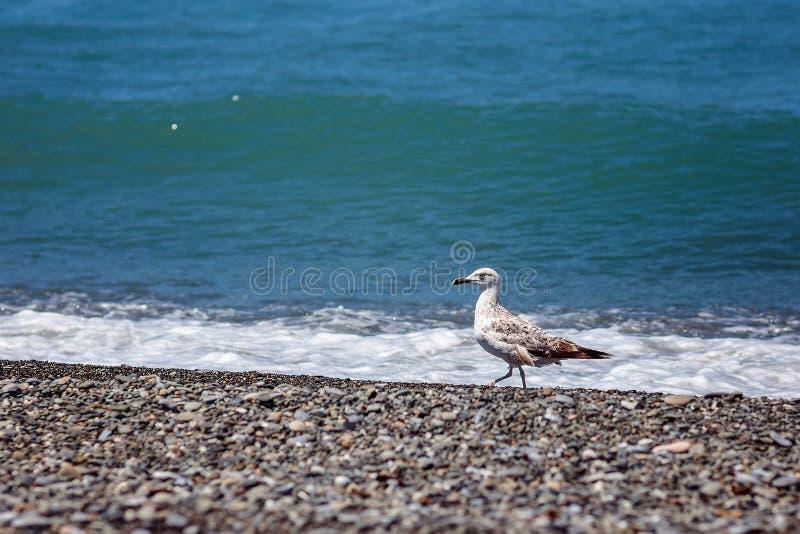 Gaviota y mar imagen de archivo libre de regalías