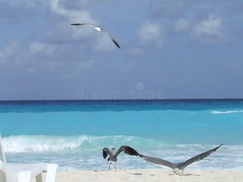Gaviotas de mar imagen de archivo libre de regalías