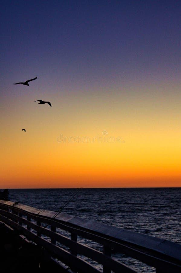 Gaviotas durante San Clemente Pier Sunset imagen de archivo libre de regalías