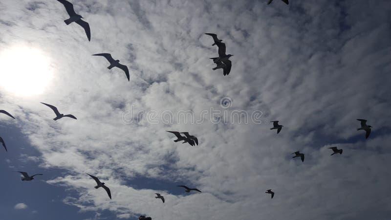 Gaviotas en el cielo imagen de archivo