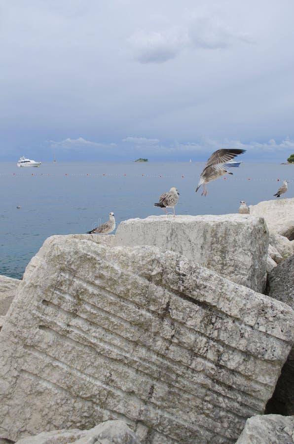 Download Gaviotas en el mar imagen de archivo. Imagen de d0, seabirds - 44854255