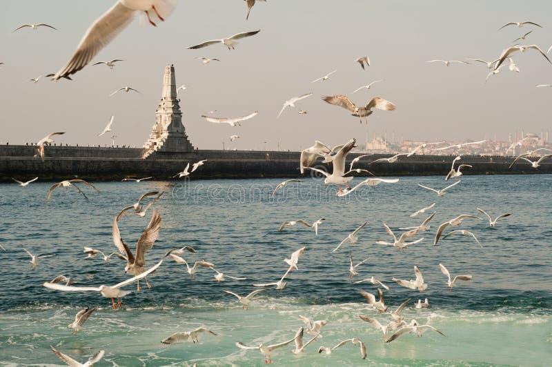 Gaviotas en el mar - Estambul fotografía de archivo libre de regalías