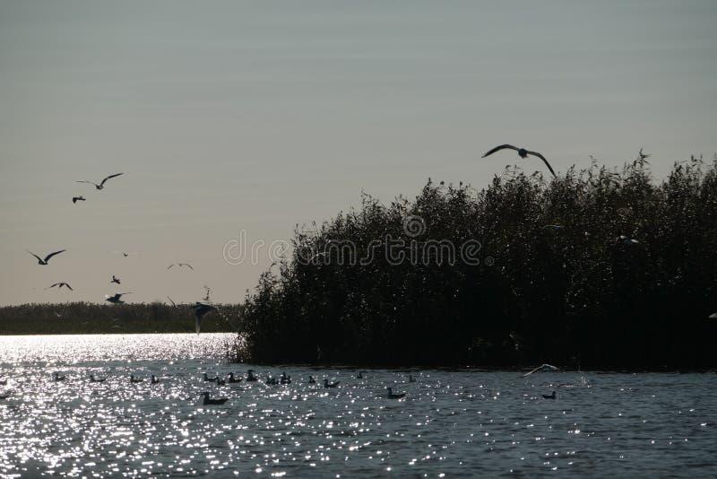 Gaviotas en el río imagen de archivo