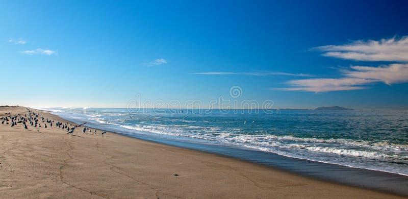 Gaviotas en la arena donde el coto del pájaro del río Santa Clara resuelve la playa en la playa de la loma de las personas que pr fotos de archivo