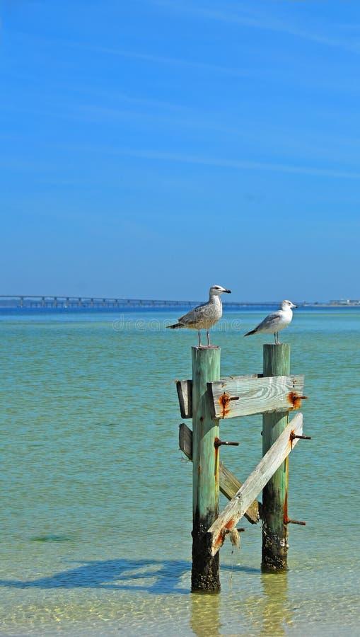 Gaviotas en la costa en postes imagen de archivo libre de regalías