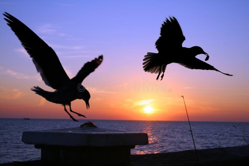 Gaviotas en la puesta del sol fotos de archivo libres de regalías