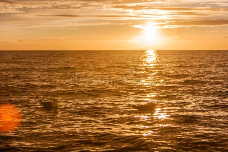 Gaviotas en puesta del sol imágenes de archivo libres de regalías