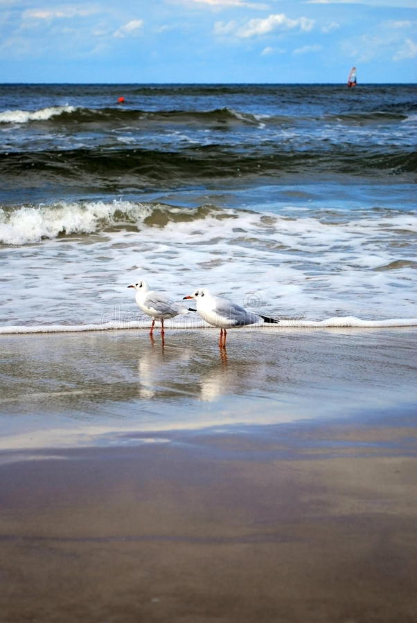 Gaviotas en una playa fotografía de archivo