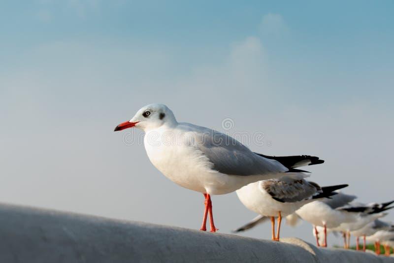 Gaviotas que se colocan en fila de mirada al cielo foto de archivo libre de regalías