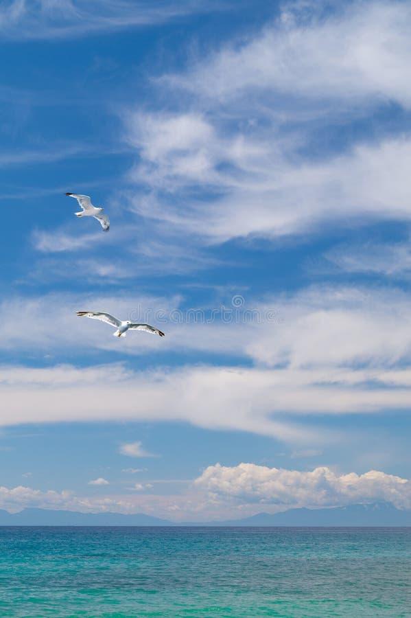 Gaviotas que vuelan en el cielo azul y las nubes hermosos fotos de archivo