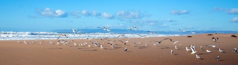 Gaviotas que vuelan en la península entre el río del Pacífico y de Santa Maria en Rancho Guadalupe Sand Dunes en la costa central fotografía de archivo libre de regalías