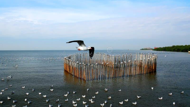 Gaviotas que vuelan encima y que flotan en el mar, colocándose en los palillos del bambú de la forma del corazón foto de archivo