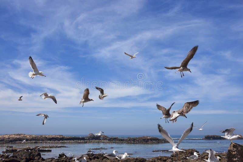 Gaviotas que vuelan sobre el agua contra el cielo azul nublado. foto de archivo