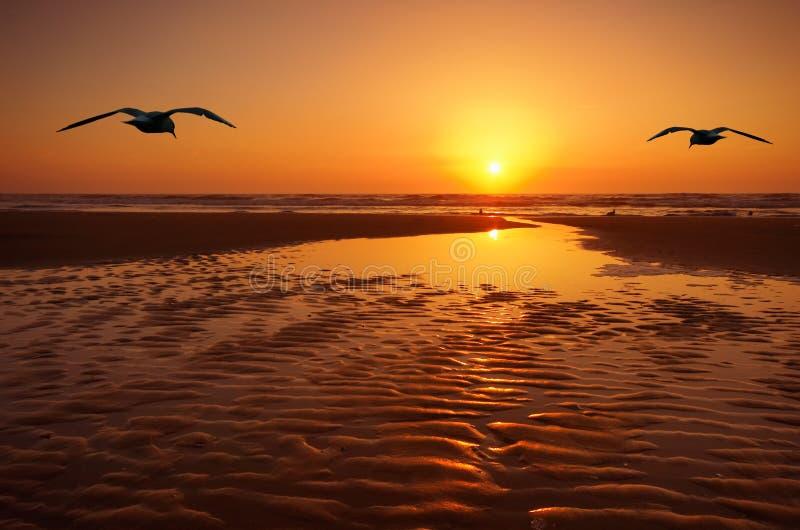 Gaviotas y puesta del sol fotos de archivo