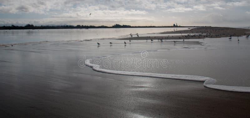 Gaviotas y seafoam del desbordamiento de levantamiento de la marea de la onda en el río Santa Clara en la playa de la loma de las fotografía de archivo
