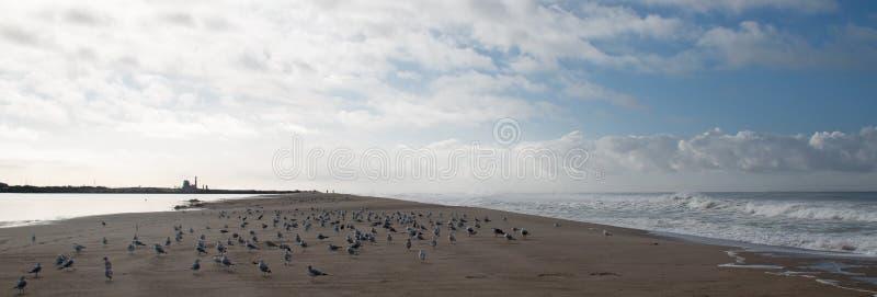 Gaviotas y seafoam del desbordamiento de levantamiento de la marea de la onda en el río Santa Clara en la playa de la loma de las imágenes de archivo libres de regalías