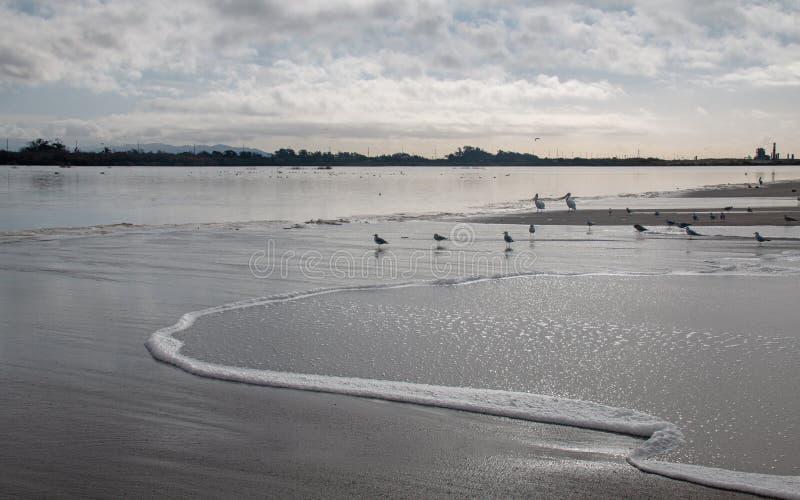Gaviotas y seafoam del desbordamiento de levantamiento de la marea de la onda en el río Santa Clara en la playa de la loma de las foto de archivo libre de regalías